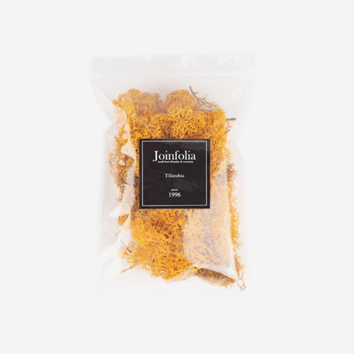 Reindeer Moss Preserved(Fall Yellow)